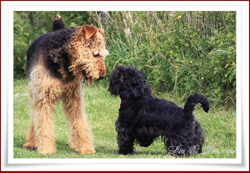 chiens-aout-2011.jpg