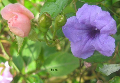 boutons-de-fleurs 1566