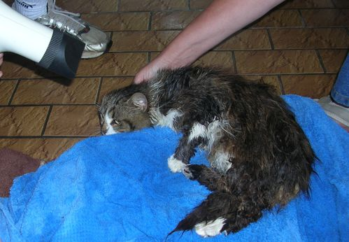 Shampooing Moustic 009