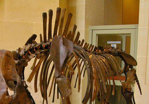 rhinocéros laineux Pléistocène Christie's 2
