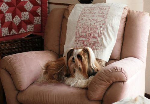 Shih tzu_broderie_patchetfantaisies_rouge_