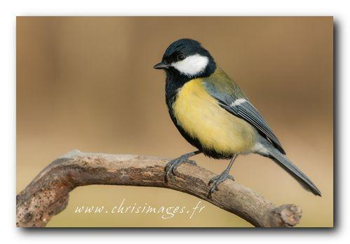 Oiseaux-9432-1024.jpg