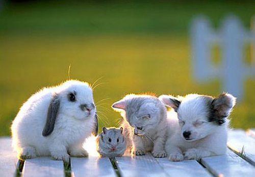 petits-animaux.jpg