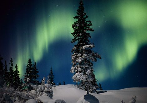 aurora-and-evergreens-978024-gabyNorbertRosing.jpg