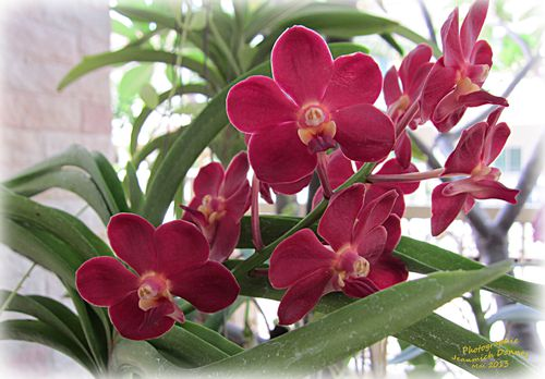 orchidees_2013_05_14_001_modifie-1.jpg