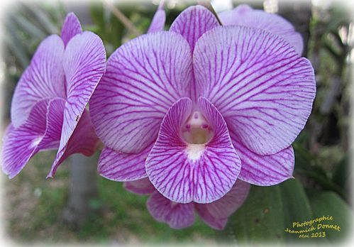 orchidees_2013_05_14_003_modifie-1.jpg