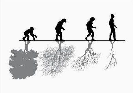 evolution arbre