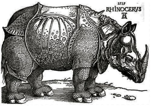 Rhinoceros-Durer.jpg