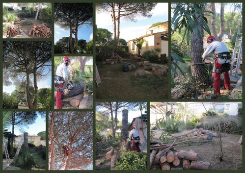 Abattage lagage d montage pins montpellier ljs for Entretien jardin montpellier