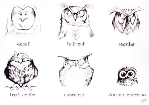 Owls and coffee