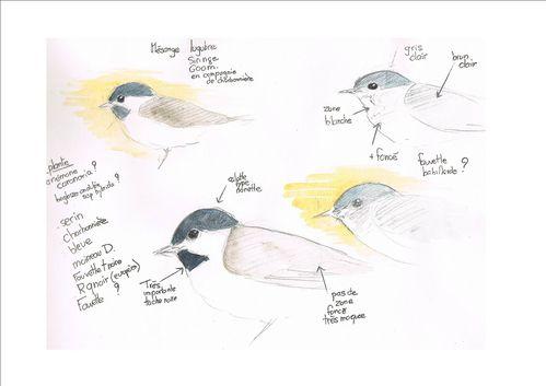 oiseaux Sirince