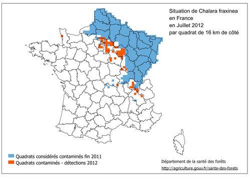 Chalara-fraxinea-2012-07_cle847154.jpg