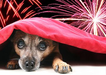 BC-SPCA-Fireworks.jpg