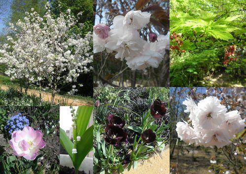2013- Fleurs2