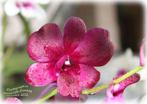 2012_12_13-orchidees_04_modifie-1.jpg
