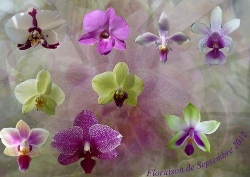 floraison-Septembre.jpg