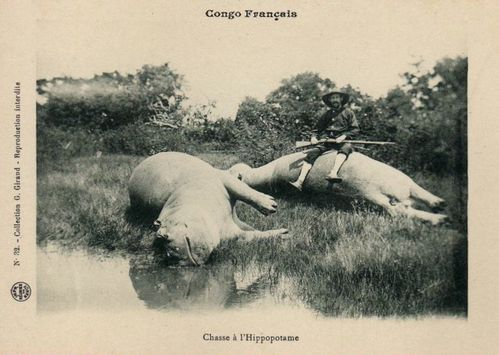 chasse-congo-hippopotame-chasse