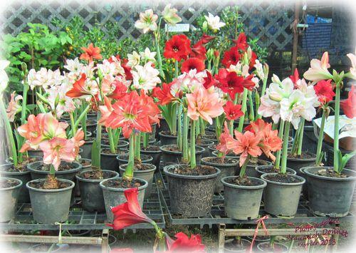 Exposition fleurs KK 049 modifié-1