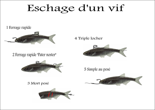 comment pecher au vif le brochet