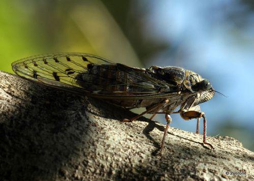 Regard---Macro-Insectes_0086-1.jpg