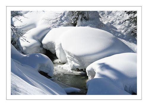 Nature-9625-web.jpg