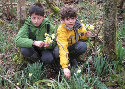 On ramasse les jonquilles sauvages Photo dm