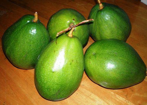 Avocats-du-jardin.JPG