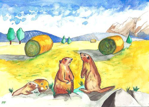 Marmottes champ