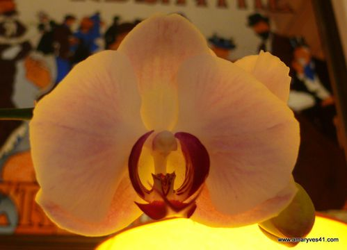 06122009 fleur -crème marron praliné 006