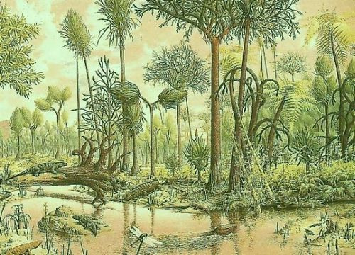 Carbonifere-2022561-L.jpg