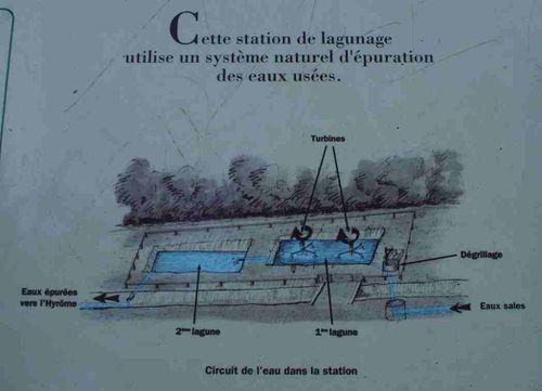 02-épuration lagunage3