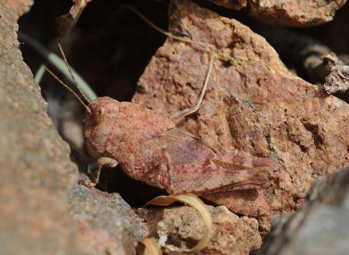 Marocco-2-insetti--scorpioni-ecc 7917 copia