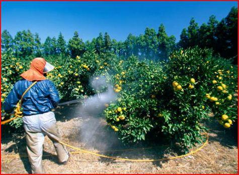 Pesticides 01