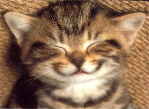 chat-sourire