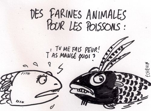 poissons-canibales0001.jpg