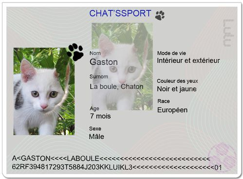 chatpssport gaston