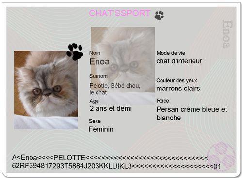 chatsport Enoa