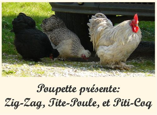 presentetionpoules