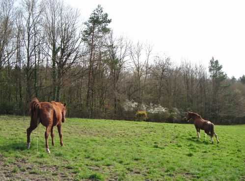 chevaux pause pipi