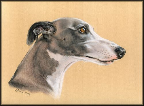 Past36-Uhby-Whippet