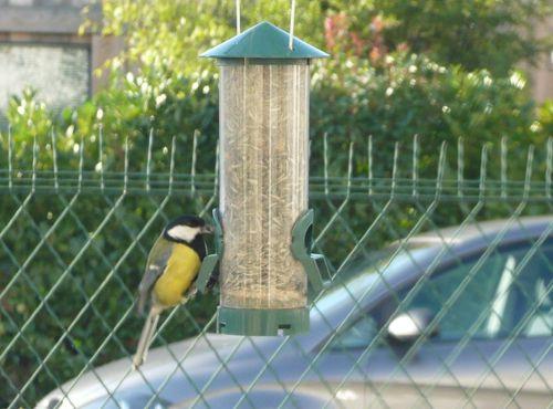 oiseaux-jardin-06.JPG