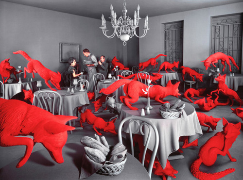 Sandy-Skoglund.png
