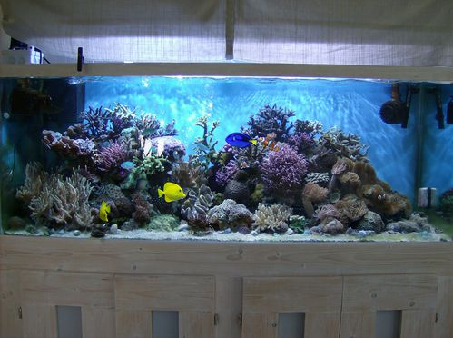 Aquarium r cifal le blog de cl ment for Aquarium 600l