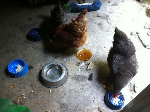 Agenda de poulette 6 july13