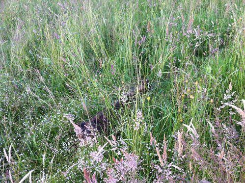 Hautes herbes 8 16juin13