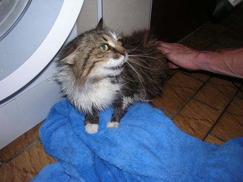 Shampooing Moustic 015