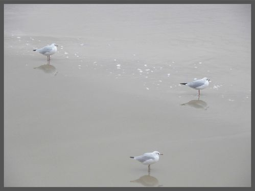 Mouettes1