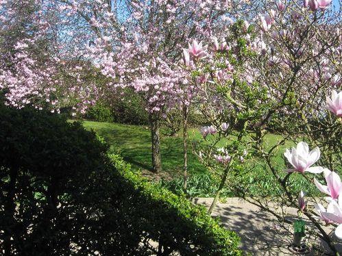 printemps2.jpg