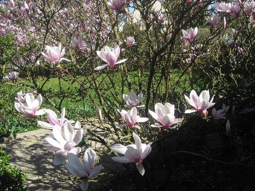 printemps4.jpg