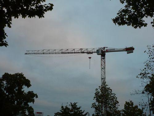 2011-10-11-Rennes-birds--1-.JPG